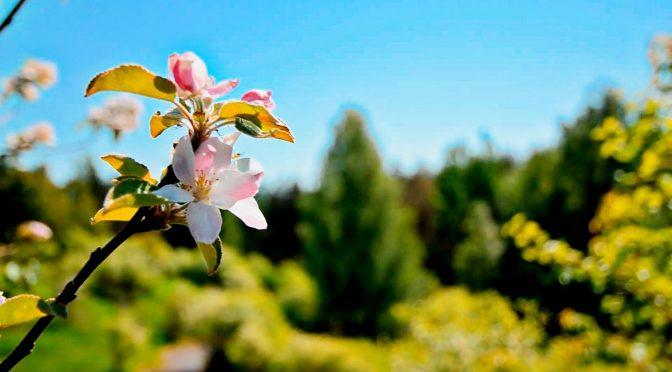 Kaidah Besar ke 3 Dari Ushul Fiqih – part 2 : Sebab-Sebab Yang Mendatangkan Kemudahan…