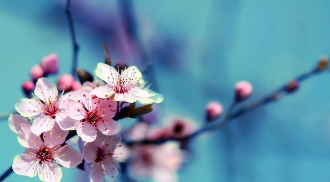 Nasihat Ibnu Hibban rohimahullah – Anjuran Untuk Mema'afkan Orang Yang Berbuat Buruk…